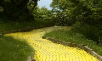 Down the Yellow Brick Road