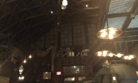 A bar primarily made up of tin and old airplane parts at the edge of the jungle